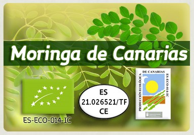 EUROPE MORINGA LEAVES · www.moringadecanarias.es