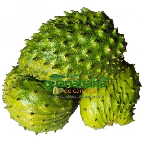 25 g. Soursop Leaves · Organic Certified - Super Premium Quality