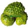 1 Kg de Fruta Guanabana de Canarias Ecologica Premium al Vacío
