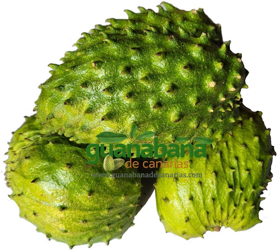 Fruta Guanabana Ecológica