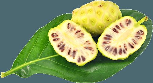 hojas noni fruta